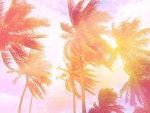Toned palms background. Pink and violet tones. Exotic tropical background, copyspace. Golden hour stock photography