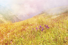 Toned panoramic view over the Carpatian mountains, and a big fog Stock Image