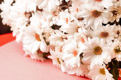 Toned photo of chrysanthemums collected in a large bouquet stock photography