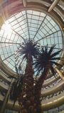 Toned image of high palms growing in hall of modern office building or shopping mall with glass roof dome. Toned photo of high palms growing in hall of modern stock photo