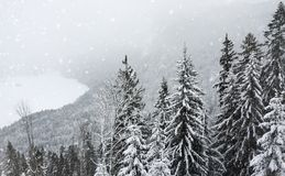 Toned photo of scenic view with pine forest of the Bavarian Alps in winter royalty free stock images