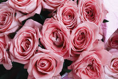 Toned pink roses, image of flowers, floral background, top view Stock Photography