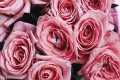 Toned pink roses, image of flowers, floral background, top view Stock Photos