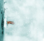 Toned winter background. Royalty Free Stock Image