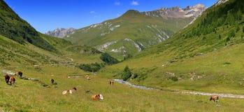 Toneel alpien panorama Royalty-vrije Stock Afbeeldingen