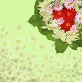 Toneel beige bloemenachtergrond met rozen, madeliefjes Stock Afbeeldingen