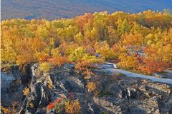 Toneel bos in de herfst Stock Afbeelding
