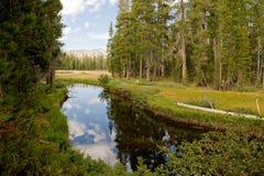 Toneel bos en waterweg Stock Afbeeldingen