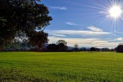 Toneel het met gras bedekken gebied met zon royalty-vrije stock fotografie