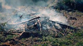 Toneel kijk met rook en as Groot vuur met takjes en firewoods stock video