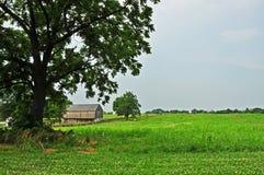 Toneel Landbouwbedrijf Royalty-vrije Stock Afbeeldingen