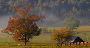 Toneel Landbouwbedrijf Stock Foto's