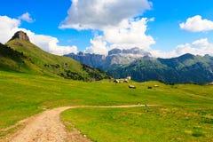 Toneel mening van groen plateau in hooggebergte Stock Afbeelding