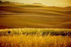 Toneel mening van het landschap van Toscanië royalty-vrije stock afbeeldingen