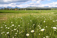 Toneel Montana Stock Foto