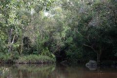 Toneel van bos en moeras Royalty-vrije Stock Fotografie