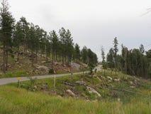 Toneelaandrijving op Naaldenweg, Custer State Park, Zuid-Dakota royalty-vrije stock afbeeldingen