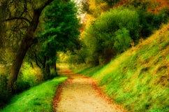 Toneelaardlandschap van plattelandsweg door bos royalty-vrije stock fotografie
