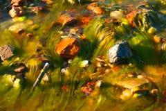Toneelachtergrond met draderige algen Spirogyra royalty-vrije stock fotografie