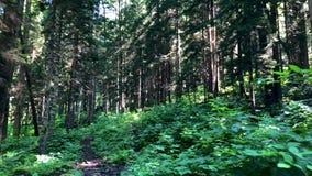 Toneelbos in de bergen van Gorgit-hoogland in het gebied van de Zwarte Zee van Artvin, Turkije stock video