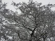 Toneeldieboom met verse sneeuw wordt behandeld stock afbeeldingen