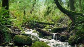 Toneelforest river moving shot stock videobeelden