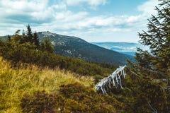 Toneelgezicht van reuzebergen en net bos bij de zomer, Karkonosze stock foto's