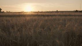 Toneellandschap tijdens zonsondergang stock footage
