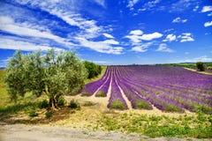 Toneellandschap van de Provence met het bloeien lavande Stock Afbeeldingen