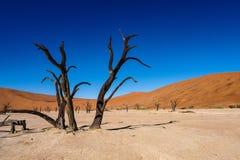 Toneelmening in Deadvlei, Sossusvlei Namib-Naukluft Nationaal Park, Namibi? stock afbeelding