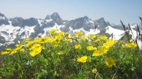 Toneelmening over alpiene bergketen met bloemen in voorgrond Stock Afbeeldingen