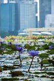 Toneelmening van bloemen zoals waterlelie en het bedrijfsdistrict, de stad van Singapore Stock Fotografie