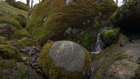 Toneelmening van een kreek in Kadriorg-park stock videobeelden