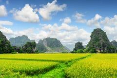 Toneelmening van heldergroene padievelden onder karst bergen royalty-vrije stock foto's
