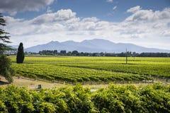 Toneelmening van Marlborough-wijnbestemming in Nieuw Zeeland royalty-vrije stock afbeelding