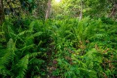 Toneelmening van regenwoud met varens Stock Afbeeldingen
