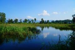 Toneelmening van riverbank en moerasland Stock Afbeeldingen