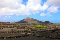 Toneelmening van Wijnbouw in La Geria op het vulkanische eiland o stock foto's