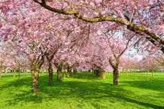 Toneelpark met tot bloei komende bomen Royalty-vrije Stock Foto's