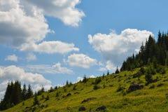 Toneelrotsen op het gras dichtbij het bos Stock Afbeeldingen