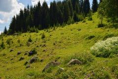Toneelrotsen op het gras dichtbij het bos Stock Foto's