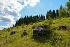 Toneelrotsen op het gras dichtbij het bos Stock Foto