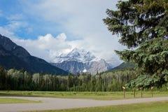 Toneelsneeuwpiek van Robson-berg en pijnboombos in de zomer royalty-vrije stock afbeelding