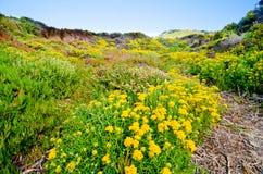 Toneeluitzicht op Route 1 van de Staat van Californië Royalty-vrije Stock Afbeelding