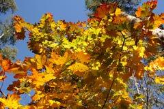 Toneelverf van het de herfstseizoen in zonlicht stock foto's