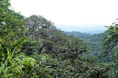 Toneelvooruitzichtenpunt in de Ecologische Reserve van Cotacachi Cayapas Stock Afbeelding