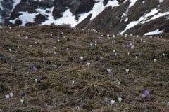 Toneelweg om Giovo in van Zuid- bergenalpen Tirol Italië over te gaan Royalty-vrije Stock Foto