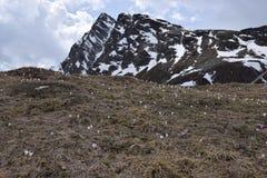Toneelweg om Giovo in van Zuid- bergenalpen Tirol Italië over te gaan Stock Afbeeldingen