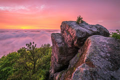 Toneelzonsondergang, de Sleep van de Pijnboomberg, Kentucky Royalty-vrije Stock Fotografie