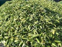 Toneladas de mazorca de maíz imagen de archivo